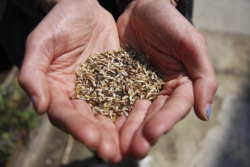 seeds+-4